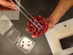 Déposer les petits cubes de pâte de fruits à la framboise sur votre tarte