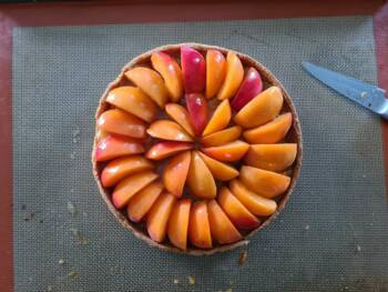 Votre tarte aux abricots est prête !